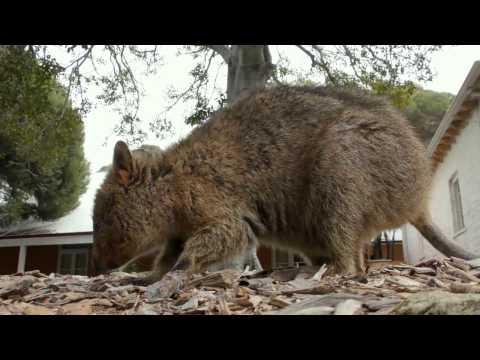 Australia | Likeable Perth