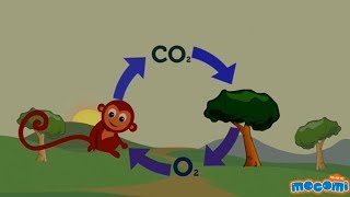 Oxygen Cycle Explained - Oxygen Facts for Kids | Educational Videos by Mocomi