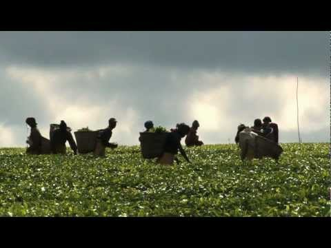 World Food Day 2012 video feature: Agricultural Cooperatives -- Key to Feeding the World