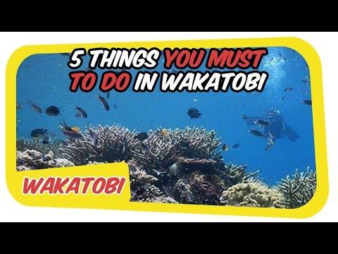 Wakatobi National Marine Park - 5 Things You Must To Do in Wakatobi Island Indonesia | PART 2