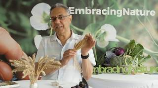 The (hi)story of bread by Jonathan Silvertown - part 1