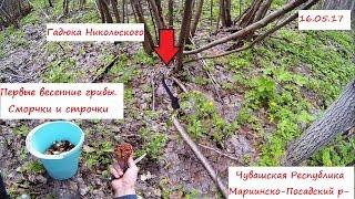В лес за сморчками. Гадюка и медянка греются на солнышке. ЧР. Мариинско-Посадский р-н.