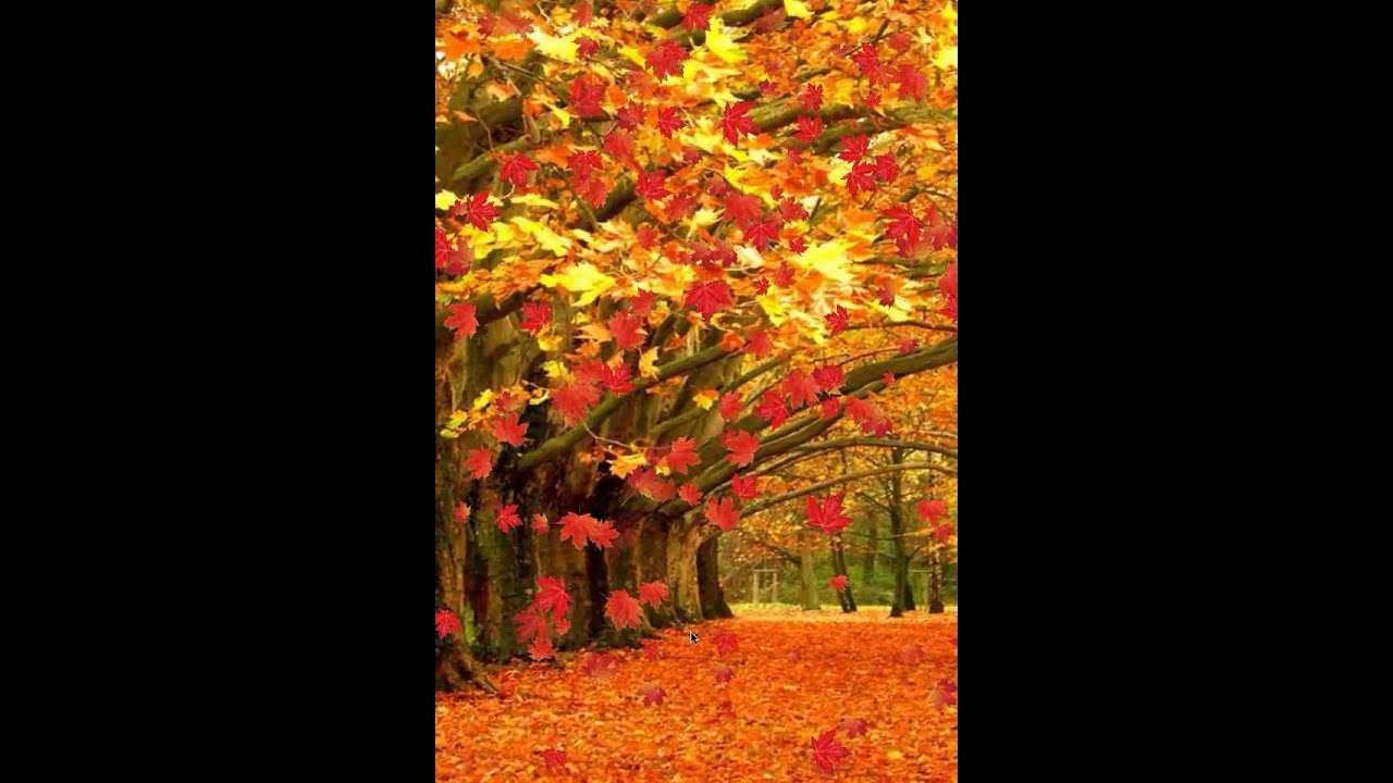 Fall live wallpaper and Daydream - YouTube