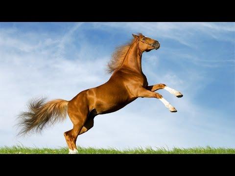 Curso Aprenda a Montar e Lidar com Cavalos - A Montaria e os Primeiros Comandos