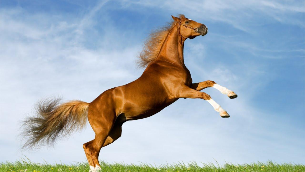 Free Animal Wallpaper Backgrounds Curso Aprenda A Montar E Lidar Com Cavalos A Montaria E
