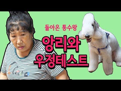 (Eng)앙리와 우정테스트 [박막례 할머니]