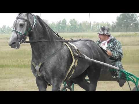 Конные соревнования в Локтевском районе