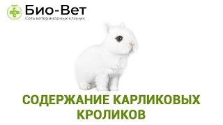 Карликовые Кролики Уход & Содержание Карликовых Кроликов. Ветклиника Био-Вет