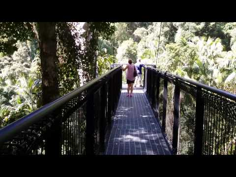 Rainforest Skywalk Mt Tamborine...hang on.