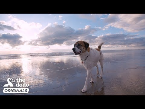 Rescue Dog And His Family Go On A Road Trip To The Ocean l The Dodo Destination: Firsts