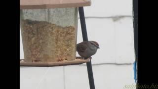 """Eyes on the Sparrow"" (Karaoke version) by Crazy li' Sal"