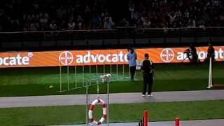 Purina World Dog Games Sydney - Agility