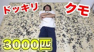 【ドッキリ】クモが3000匹も、寝ている真横にいたらどうなる!? thumbnail