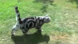 Как гулять с котом на даче