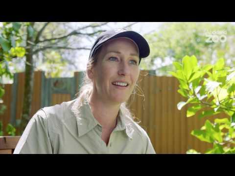 Zoo Tales - Meet keeper Amy