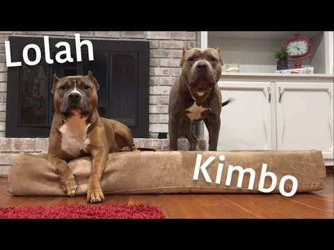 big-barker-xl-orthopedic-dog-bed-review