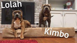 Big Barker XL Orthopedic Dog Bed Review