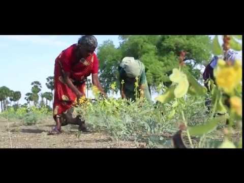 Understanding nutrition crisis among India's tribal children