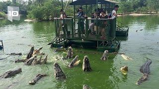 10 Atracciones turísticas con animales más peligrosas del mundo