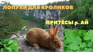 Лопух в рационе кролика: кормить или не кормить? / Притёсы река Ай