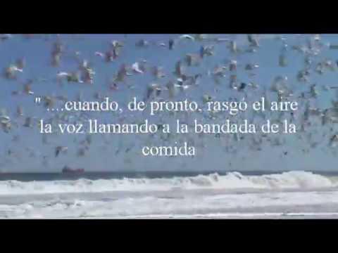 Juan Salvador Gaviota Pdf Ingles Limigem