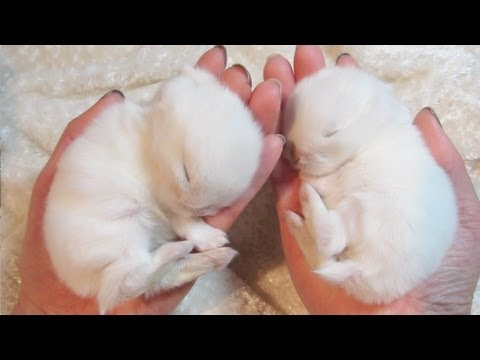 Cute Sleepy Baby Bunny Sleeping