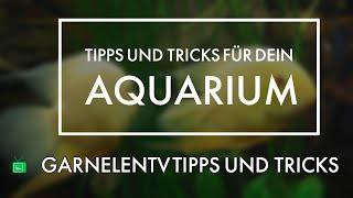 AQUARIEN BEWERTEN | Dein Aquarium | GarnelenTv