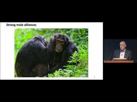 Self-Domestication in Bonobos and Other Wild Animals on YouTube