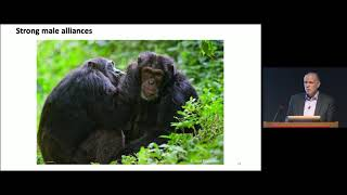 Self-Domestication in Bonobos and Other Wild Animals