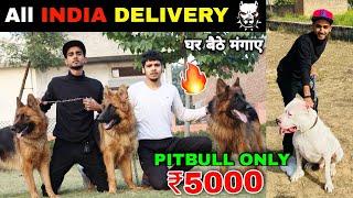 Cheapest Dog Market in India | Dog in Cheap Price | Pitbull | American bully | Tibetan mastiff