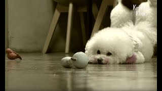 Dog Falls Into Depression Because Of Cheating Husband | Kritter Klub