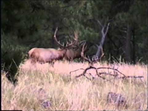 Elk Song Ranch #1B.wmv