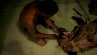 limpando porco do mato!!!itanhomi..