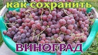 Как сохранить урожай винограда до Нового года