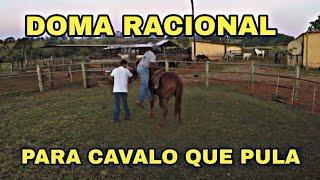 Doma Racional, Ele Montou No Cavalo No Segundo Dia