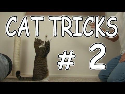 CAT TRICKS # 2