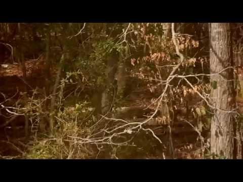 nouvel ordre mondial | Une femme affirme avoir vu un Dogman dans l'Arkansas