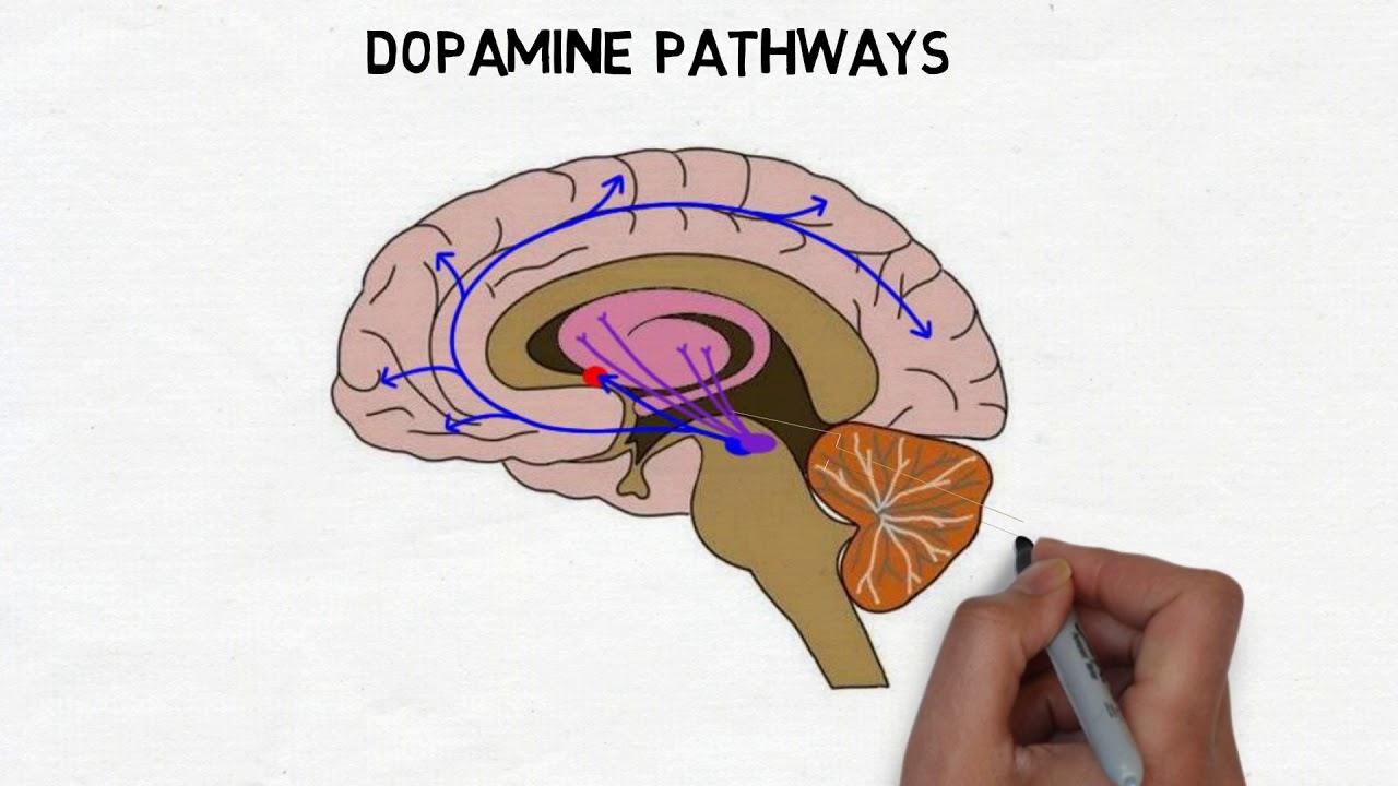2 minute neuroscience dopamine youtube