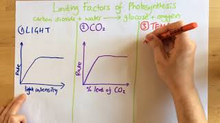 Limiting Factors of Photosynthesis - p48