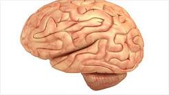 hqdefault - Depression Between Convolutions Cerebrum Called