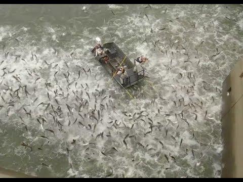 Bayou Wild [ep 68] Flying Fish