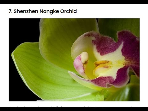 top-10-most-expensive-flowers-in-the-world.