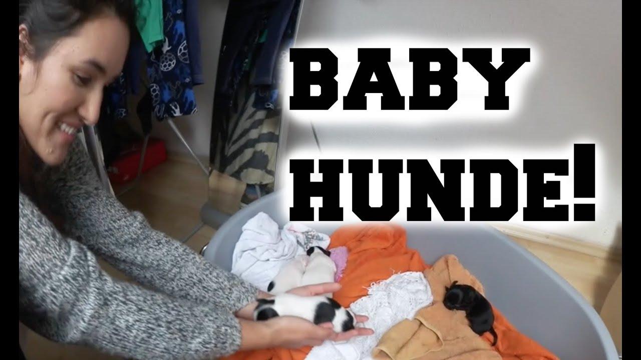 baby hunde ankat youtube. Black Bedroom Furniture Sets. Home Design Ideas
