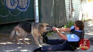 Unartig Polizeihund