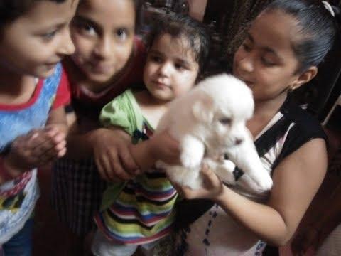 "Pomeranian spitz puppies (( sale in delhi ncr))  7048966925 "" pure breed """