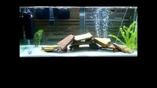 fish tank is cloudy 1 50 watch this get clear awesome