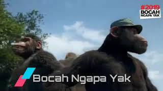 Wali band Bocah ngapa yak versi oranghutan