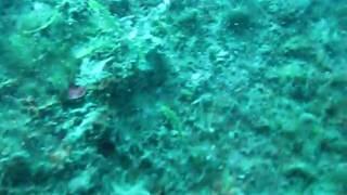 """Wreck dive  """"Zingara""""  Sosua Dominican Republic."""