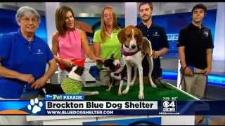 Pet Parade: Brockton Blue Dog Shelter