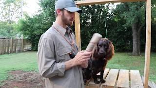 Force Fetching your Boykin Spaniel (Training Tula 005)